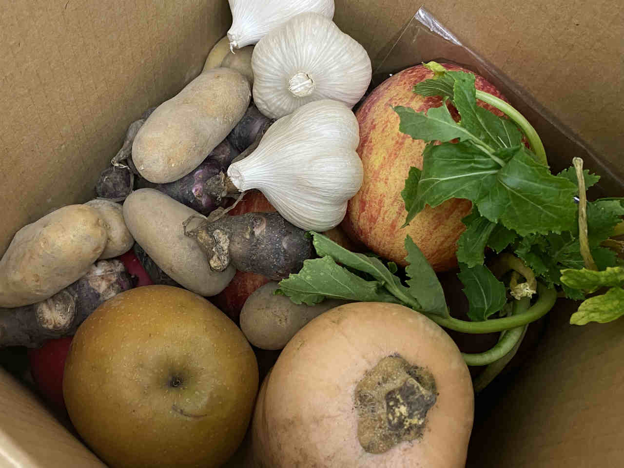 廣田神社様で行われた新嘗祭に奉納された野菜や果物を県社協が運営する「県善意銀行」を通じて頂戴しました。